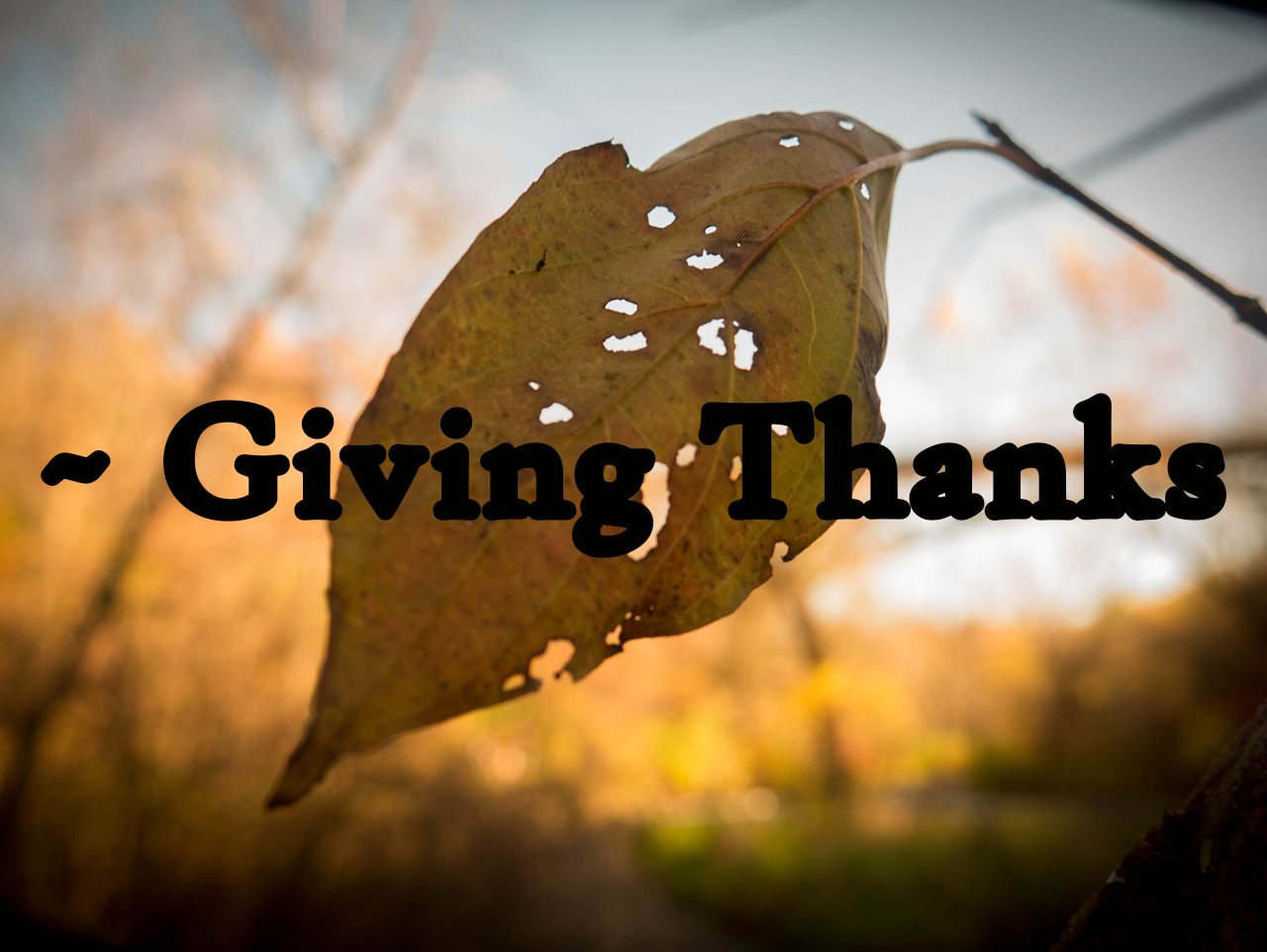 The Poetry Podcast ~ Giving Thanks Edition Feat. Krystal Daniels & Sadogue Enigma